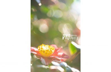 福岡の出張撮影サービス「RYO PHOTO(リョウフォト)」の出張カメラマン山口が福岡で出張撮影した椿の写真