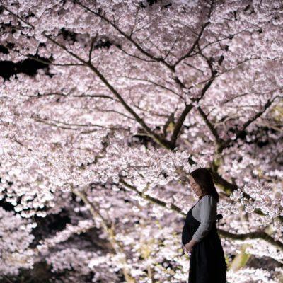 夜桜を背景にしたマタニティ写真