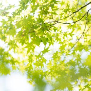 ブログ用若葉の写真