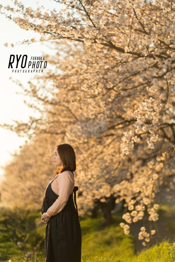 夜桜 マタニティフォトの写真