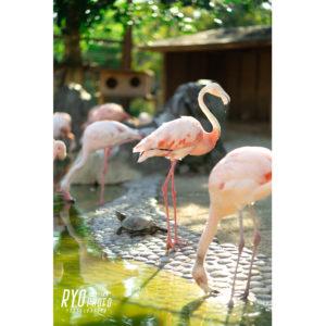久留米市鳥類センターの写真