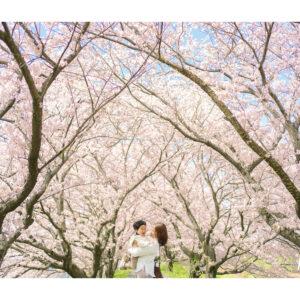 満開の桜背景での親子写真 表紙