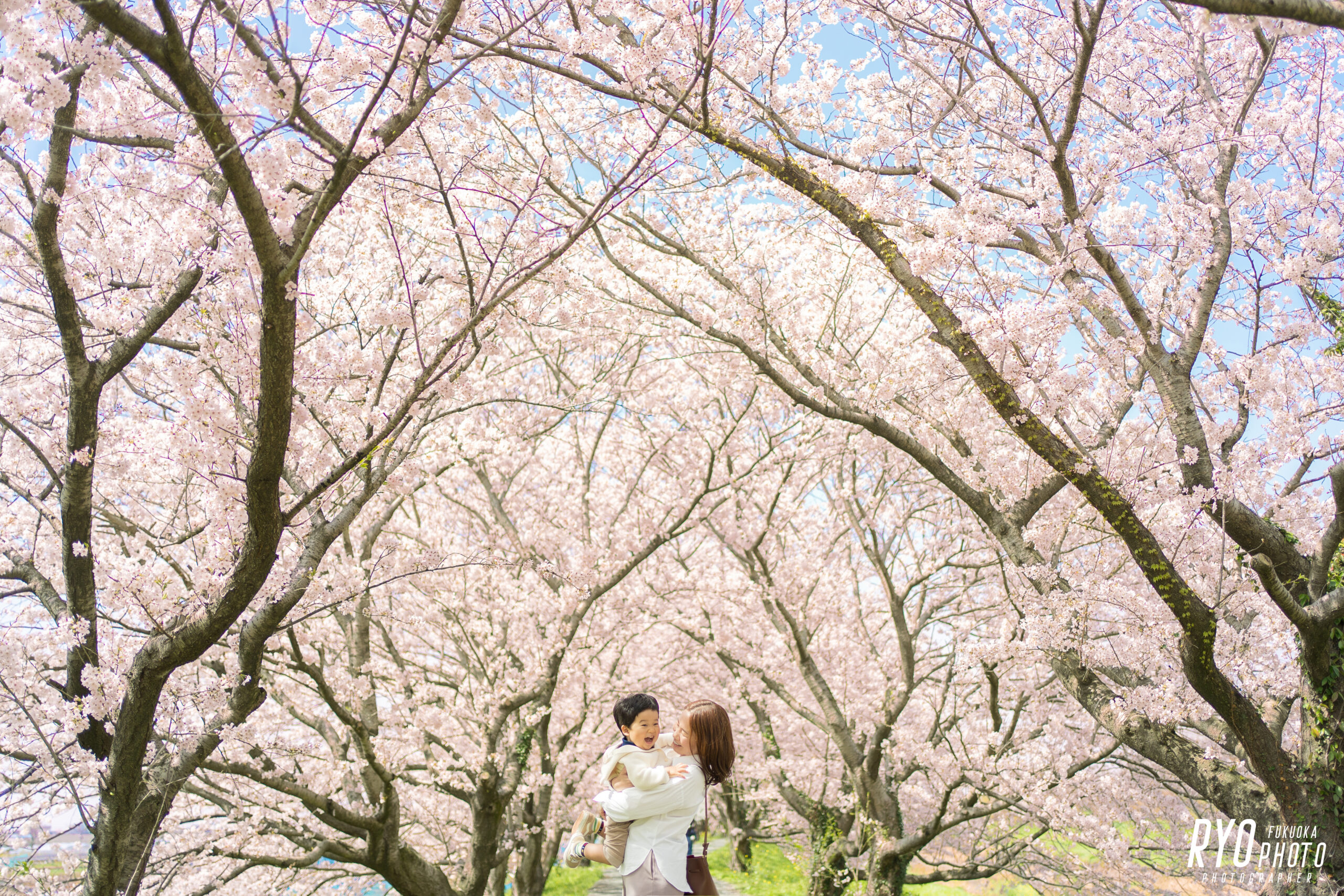 満開の桜背景での親子写真
