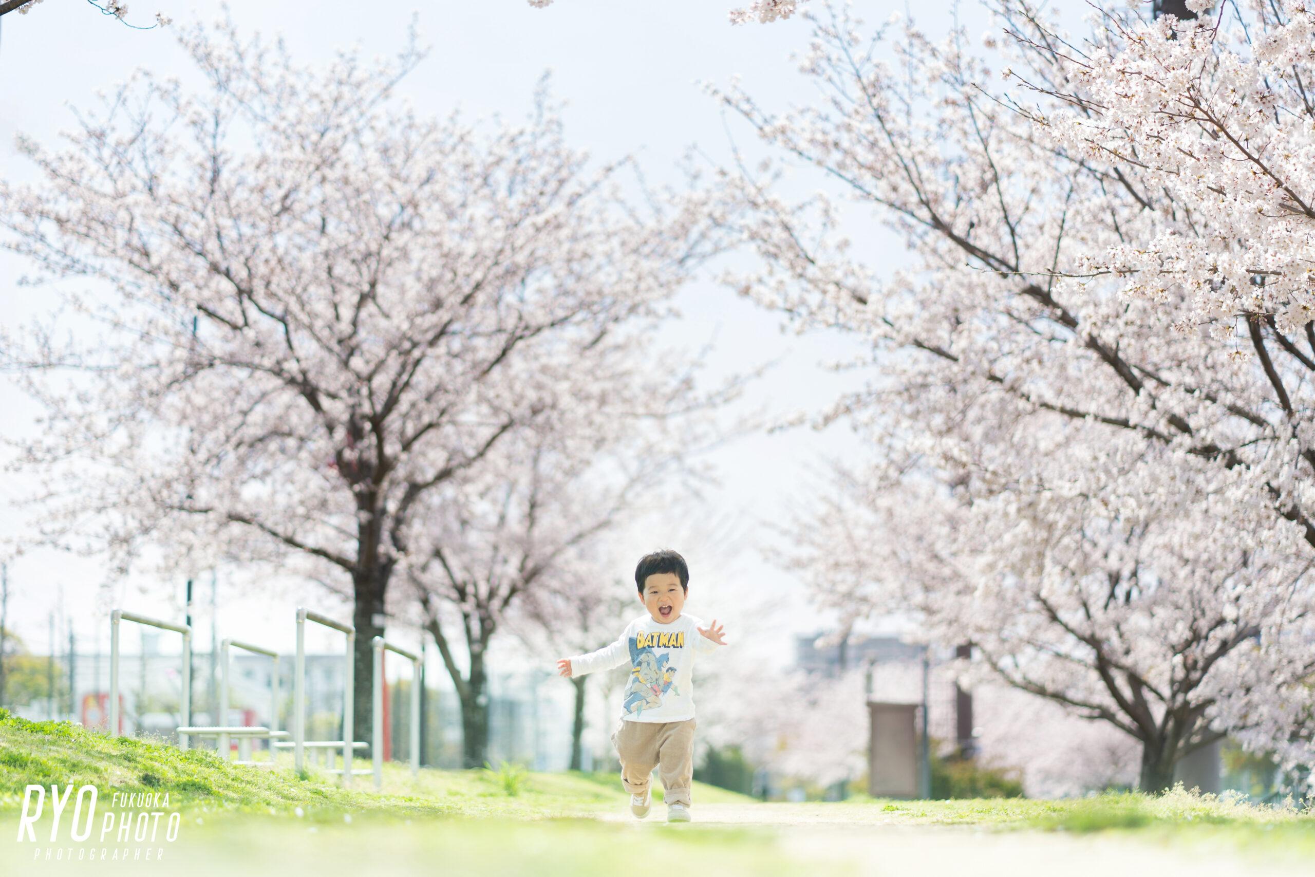 満開の桜背景での子供写真